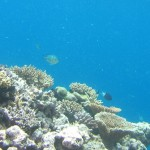 Great Barrier Reef - Underwater Photography
